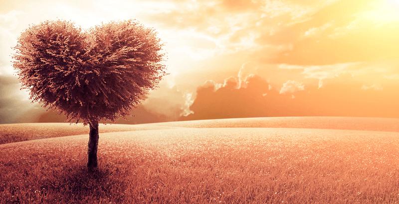 Hạnh Phúc – Hiểu về trái tim